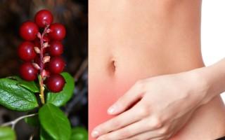 Брусника при лечении цистита у женщин