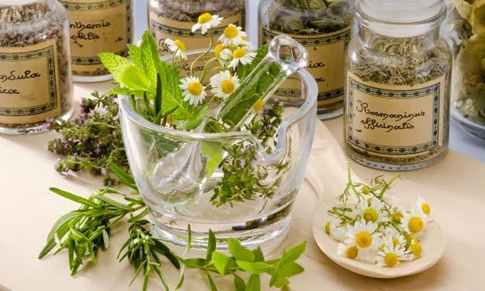 Травы от цистита у женщин - быстрое лечение, список, какие, пить