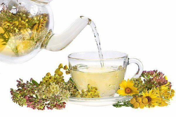 Чай при цистите – зеленый, почечный, ромашковый, травяной, монастырский, брусничный